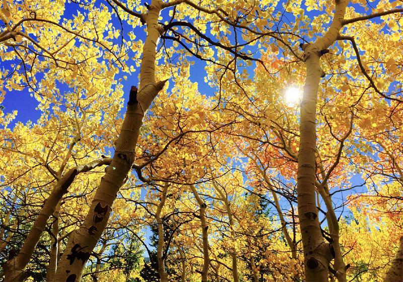 5 Gründe den Herbst zu lieben Lichtspiel und Farbenpracht