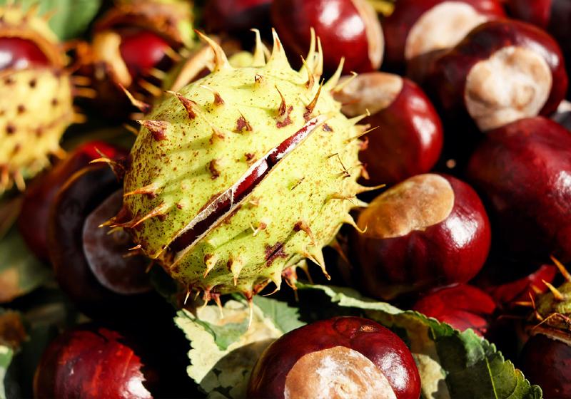 5 Gründe den Herbst zu lieben Schlemmerzeit